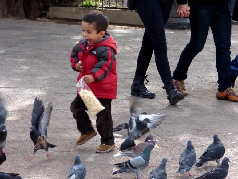 A little local boy runs after the birds, attempting to feed them and chase them at the same time.