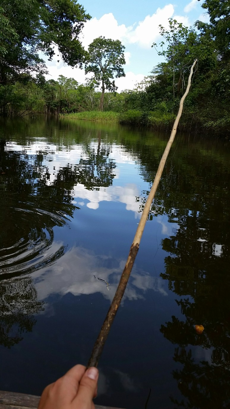 Fishing with bits of chicken, a short line, and a bamboo pole in the Amazon River