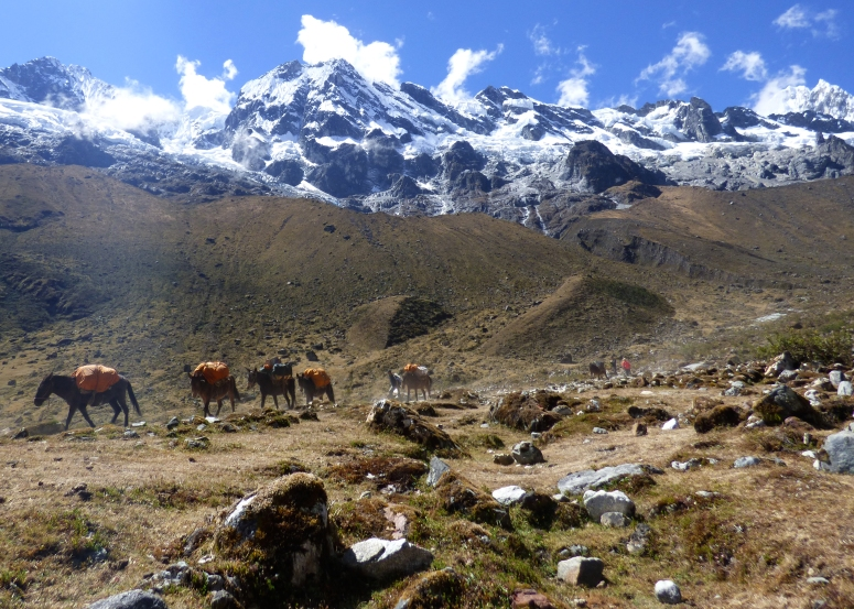 The mules carry the camp and cook gear to the next camp that we will stay at. The men that lead them make our days trek in 3-5 hours, showing just how acclimated they are to living at such high altitudes.
