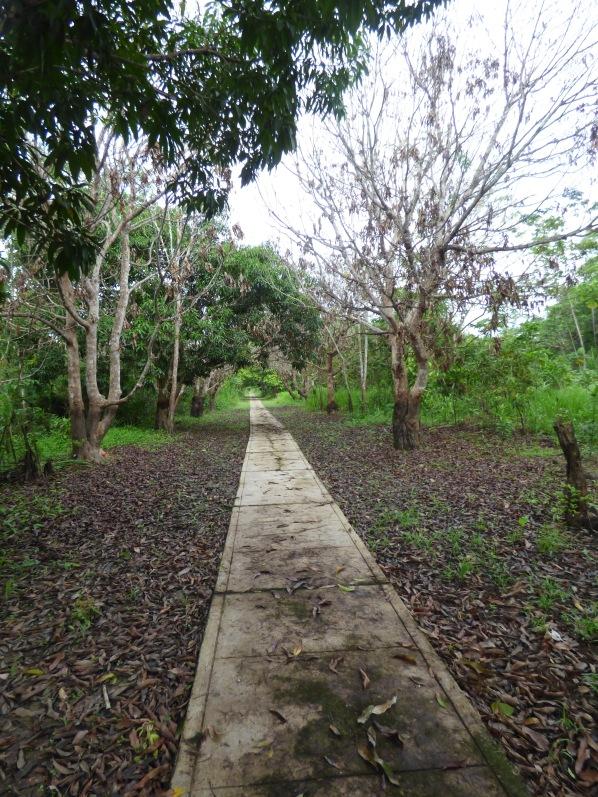 A single sidewalk runs 2 kilometers, the length of the village